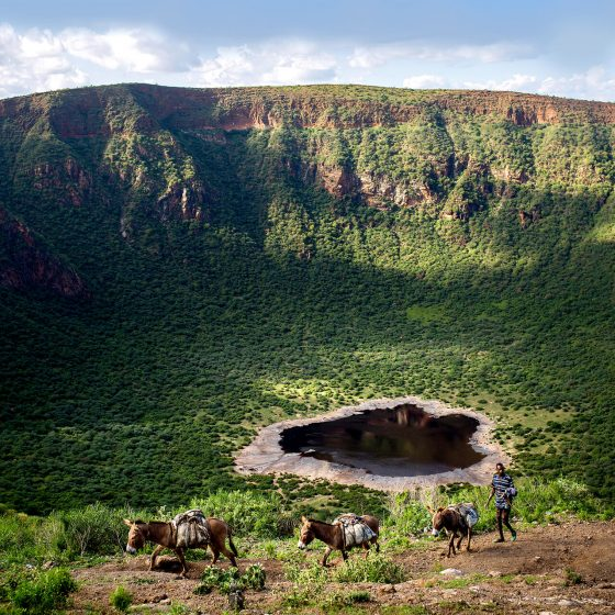 A man walking his donkeys around the edge of a lush green extinct volcano in Ethopia.
