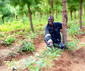 Andrea kneeling next to newly planted trees